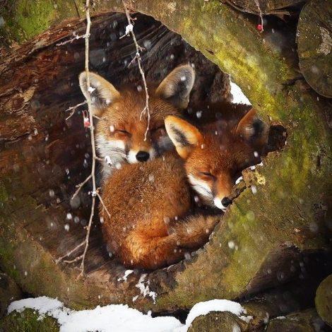 Lišky mají doupata a ptáci hnízda